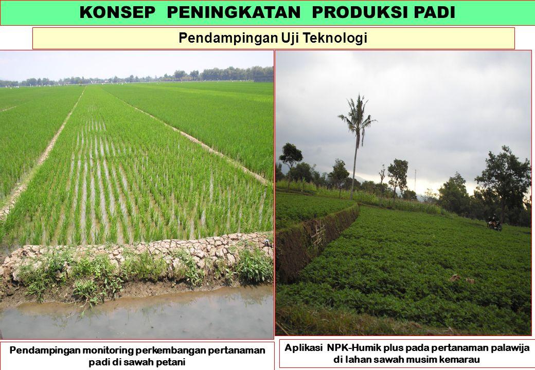 KONSEP PENINGKATAN PRODUKSI PADI Pendampingan Uji Teknologi Aplikasi NPK-Humik plus pada pertanaman palawija di lahan sawah musim kemarau Pendampingan