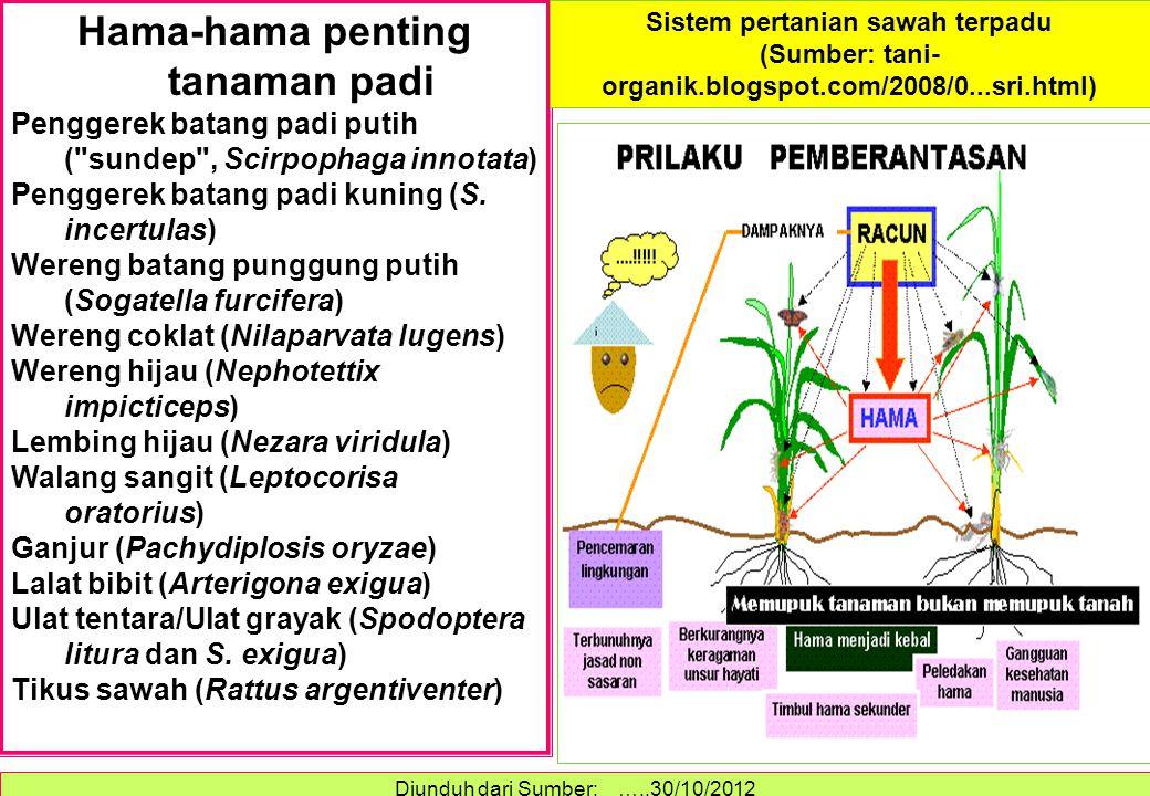 Hama-hama penting tanaman padi Penggerek batang padi putih (