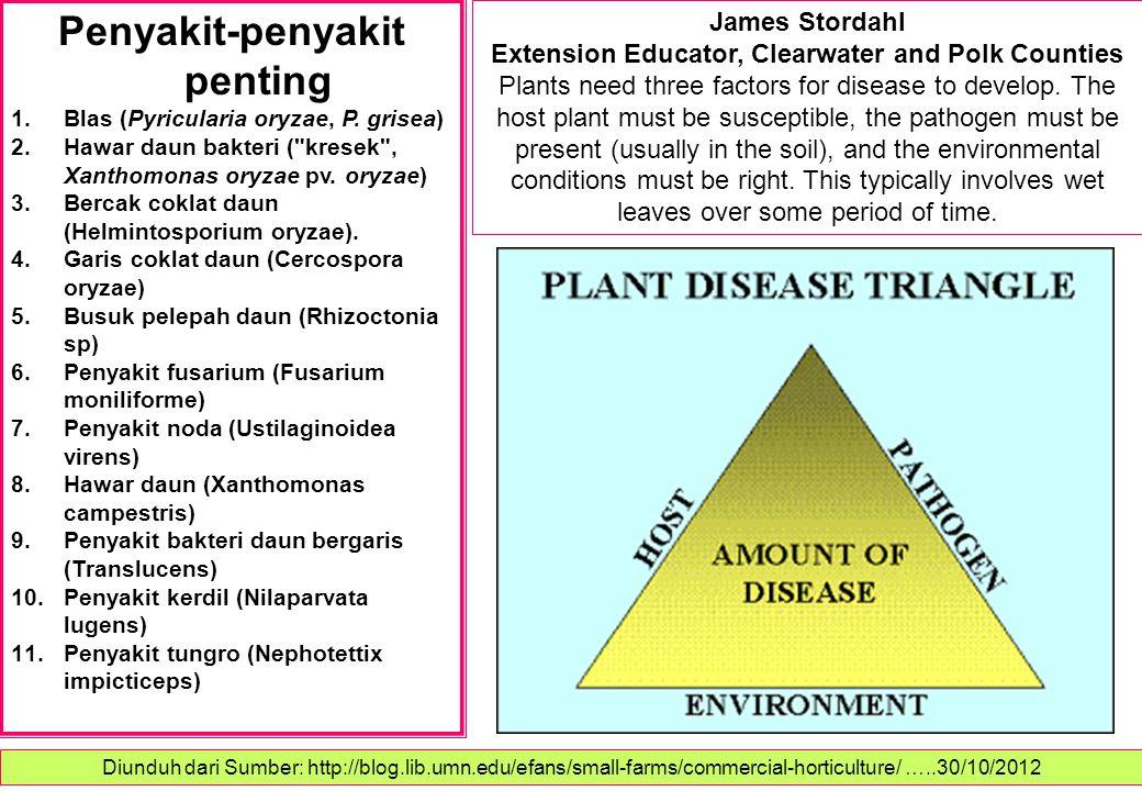Penyakit-penyakit penting 1.Blas (Pyricularia oryzae, P. grisea) 2.Hawar daun bakteri (