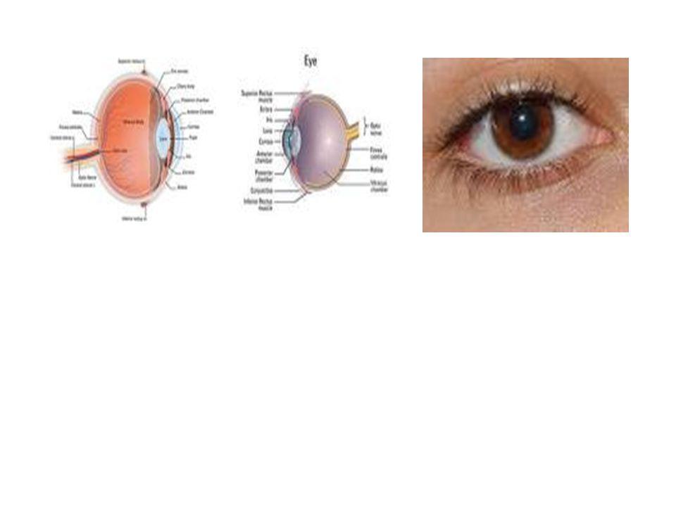 Penglihatan Pada lubang penglihatan diisi:  Bola Mata : dapat melihat alam, benda-benda, warna yg tidak dipecahkan oleh pakar biologi dan kesehatan.