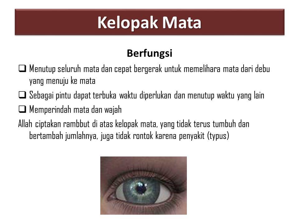 Kelopak Mata Berfungsi  Menutup seluruh mata dan cepat bergerak untuk memelihara mata dari debu yang menuju ke mata  Sebagai pintu dapat terbuka wak