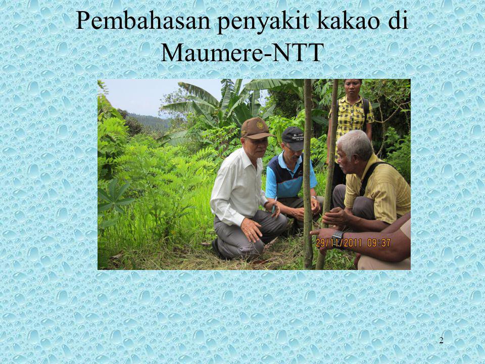 Pembahasan penyakit kakao di Maumere-NTT 2