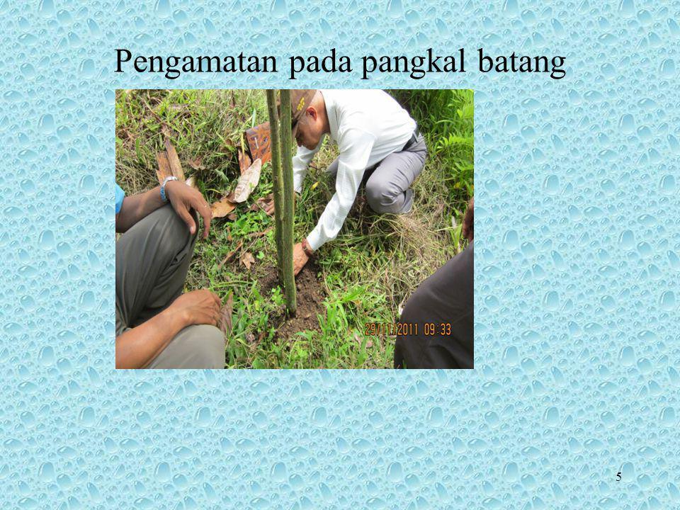 16 SEGITIGA PENYAKIT Berlaku di ekosistem alami (natural ecosystem) –Belum ada campur tangan manusia –Bukan di lahan pertanian –Dicirikan adanya keragaman & keseimbangan Contoh –Interaksi tumbuhan-patogen di hutan belantara