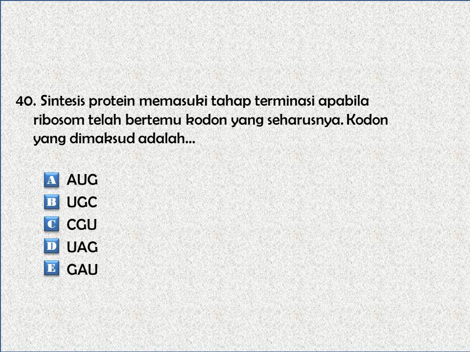 39. Diketahui: CAU=Serin, CCA=Prolin, GGA=Glutamin, GUG=Valin, GCC=Alanin. Apabila urutan basa nitrogen yang akan melakukan transkripsi adalah CAC-CCT