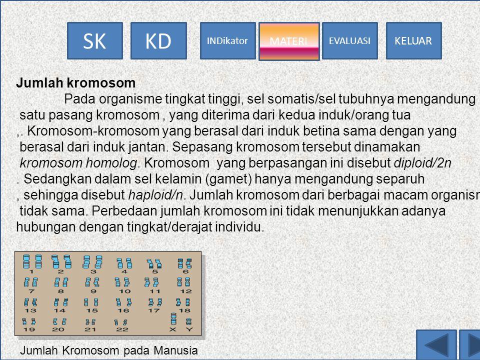 EVALUASI MATERI INDikator KDSK KELUAR MATERI KROMOSOM Salah satu bagian nukleus benang kromatin. Benang kromatin merupakan bagian yang mampu menyerap