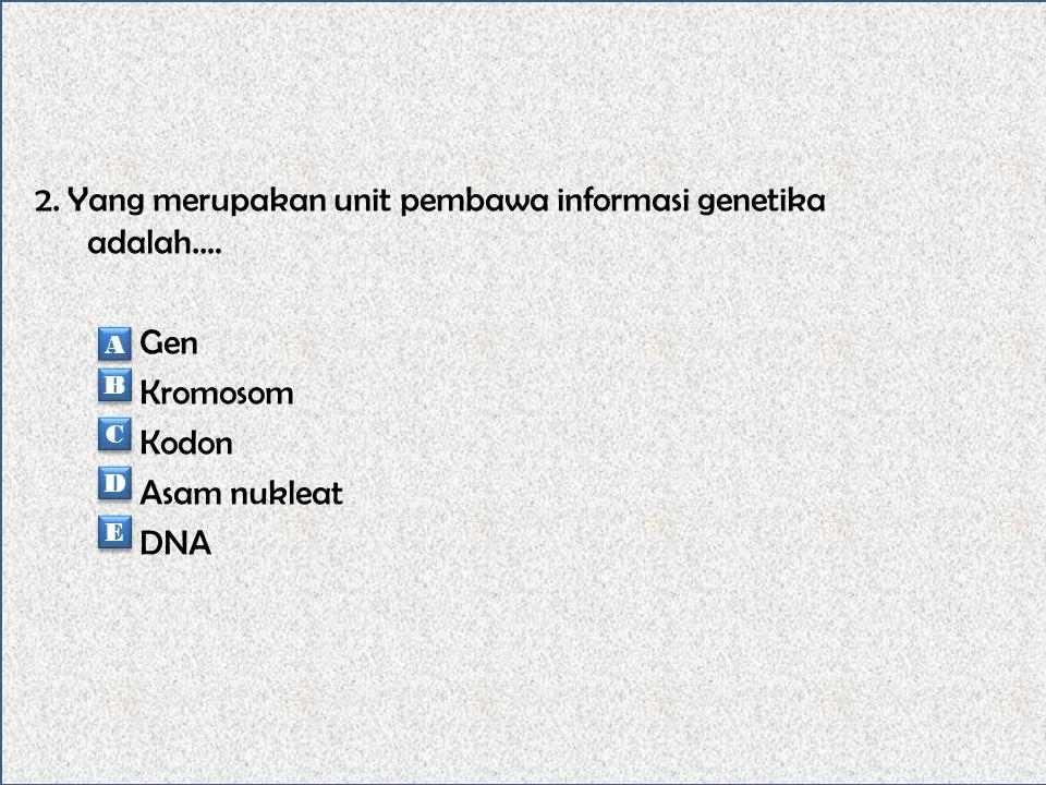1. Pada saat sel tidak sedang membelah, dapat terlihat adanya benang – benang tipis yang disebut….. Kromosom Kromatin Kromatofor Asam nukleat Gen A A