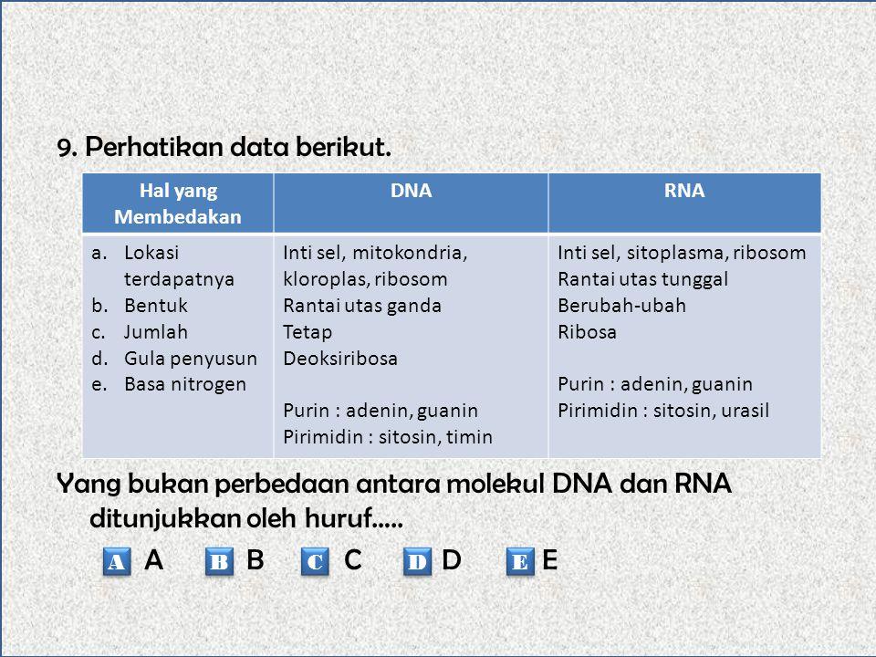 8. Pada replikasi DNA secara semikonservatif akan terjadi…… Dua utas DNA tidak perlu saling memisah Salah satu utas DNA akan berfungsi sebagai cetakan