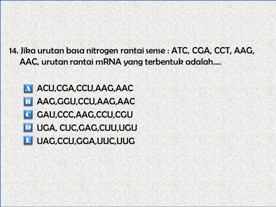 13. Fungsi DNA adalah….. Berhubungan dengan sintesis protein dan kadarnya tetap. Tidak berhubungan dengan sintesis protein dan kadarnya tetap. Berhubu