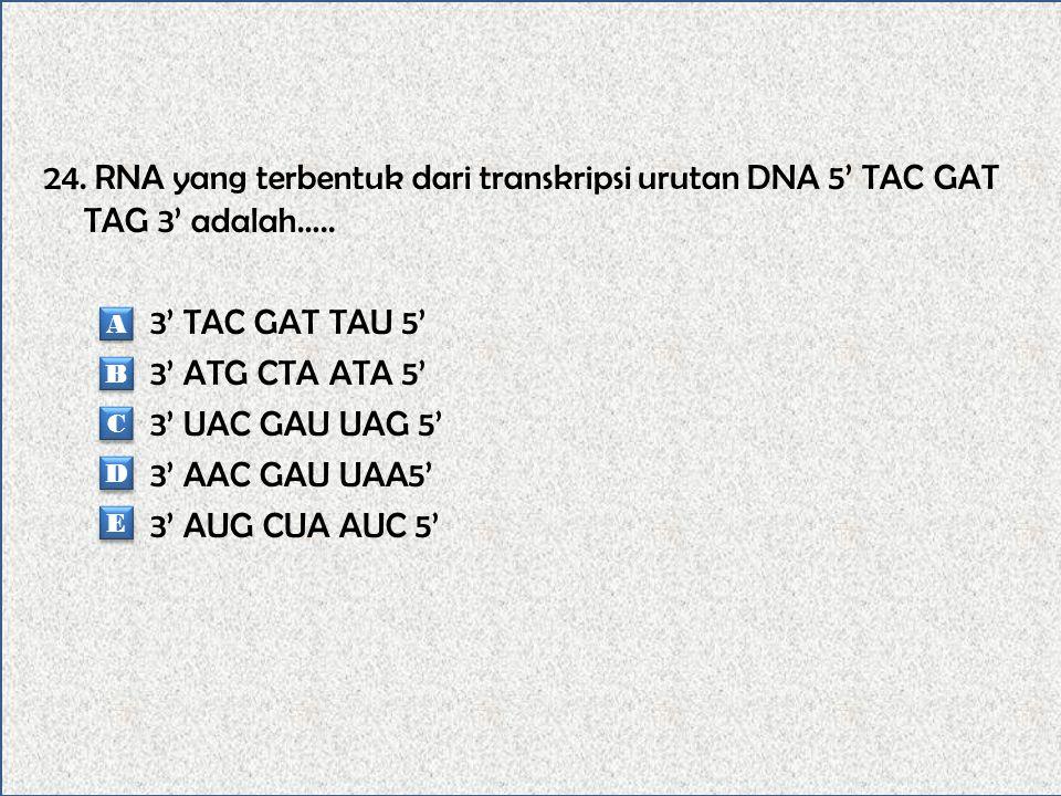 23. Berikut ini urutan yang benar berdasarkan ukuran, dari yang terbesar adalah….. Gen-kromosom-nukleotida-kodon Kromosom-gen-kodon-nukleotida Nukleot