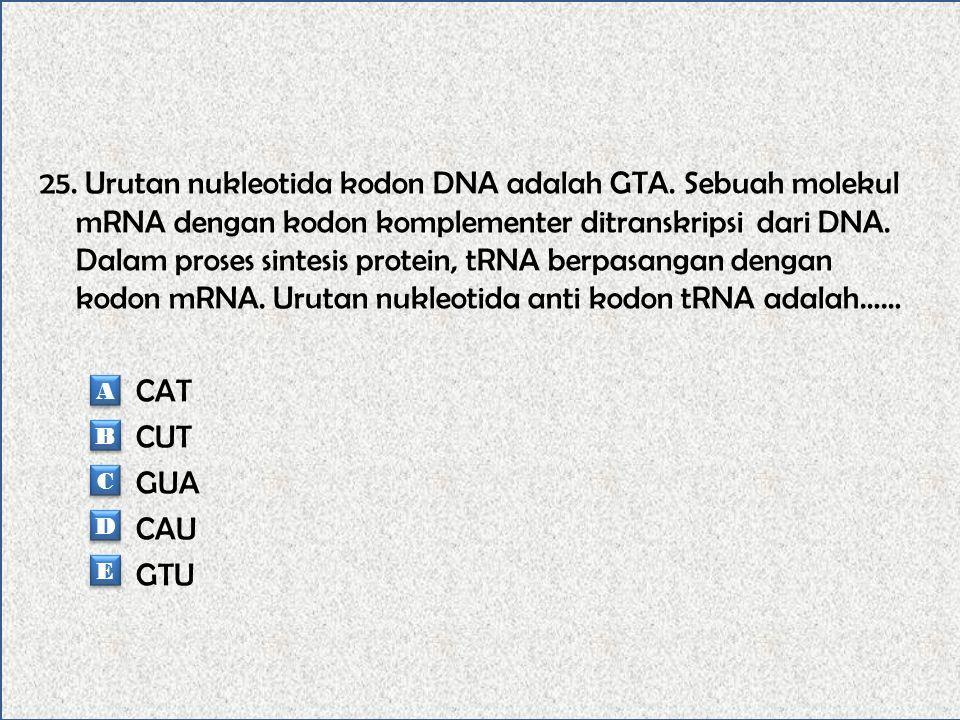 24. RNA yang terbentuk dari transkripsi urutan DNA 5' TAC GAT TAG 3' adalah….. 3' TAC GAT TAU 5' 3' ATG CTA ATA 5' 3' UAC GAU UAG 5' 3' AAC GAU UAA5'