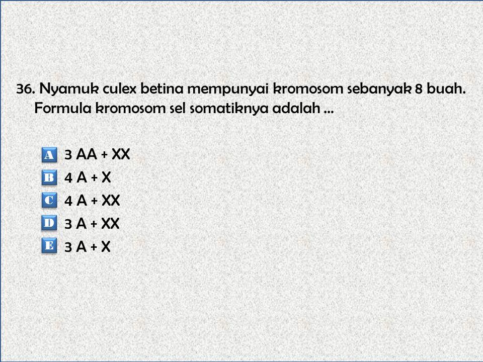 35. Jumlah kromosom kucing sebanyak 19 pasang, maka jumlah kromosom sel somatiknya adalah … 19 pasang 18 buah 38 buah 19 buah 18 pasang A A B B C C D