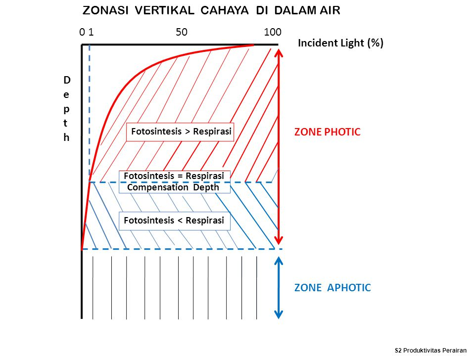 ZONASI VERTIKAL CAHAYA DI DALAM AIR 0 1 50 100 Incident Light (%) DepthDepth Fotosintesis > Respirasi Fotosintesis = Respirasi Fotosintesis < Respiras