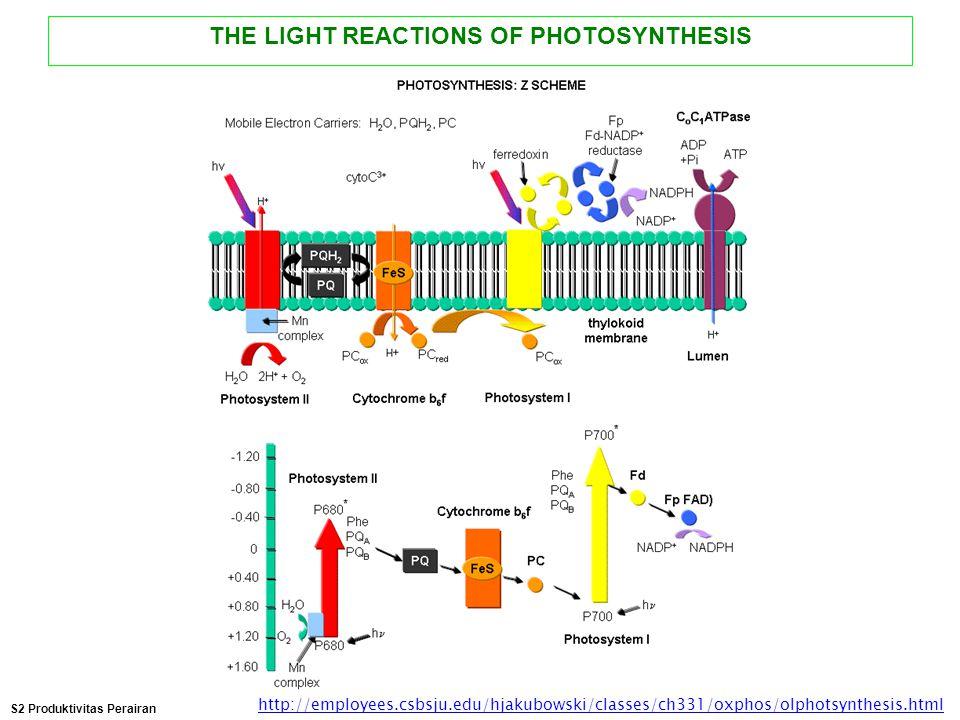 THE LIGHT REACTIONS OF PHOTOSYNTHESIS http://employees.csbsju.edu/hjakubowski/classes/ch331/oxphos/olphotsynthesis.html S2 Produktivitas Perairan