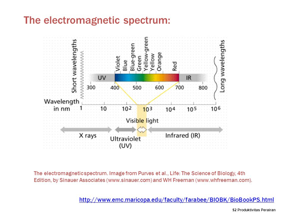 The electromagnetic spectrum. Image from Purves et al., Life: The Science of Biology, 4th Edition, by Sinauer Associates (www.sinauer.com) and WH Free