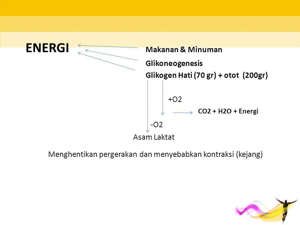ENERGI Makanan & Minuman Glikoneogenesis Glikogen Hati (70 gr) + otot (200gr) Asam Laktat Menghentikan pergerakan dan menyebabkan kontraksi (kejang) -