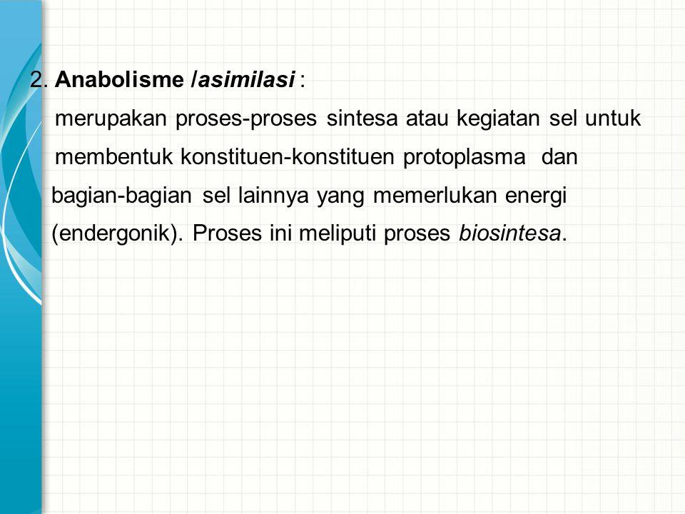 2. Anabolisme /asimilasi : merupakan proses-proses sintesa atau kegiatan sel untuk membentuk konstituen-konstituen protoplasma dan bagian-bagian sel l