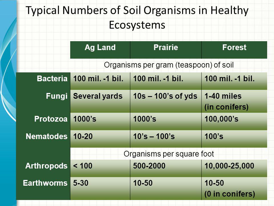 organisms in Soil Bacteria Actinomycetes Fungi Protozoa Nematodes Earthworm Mites Myriapods Isopods