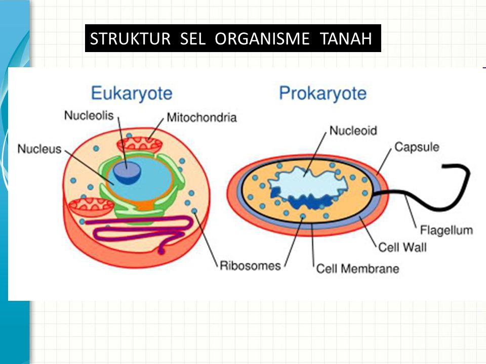 ProkariotEukariot Struktur genetik Jumlah kromosom Mitose Dinding inti DNA inti terikat dengan histon- histon DNA dalam organel 1 tidak ada tidak tidak ada Lebih dari 1 Ada Ya Ada Struktur dalam sitoplasma Sifat ribosom sitoplasma Sifat ribosom di organel Mitokhondria Khloroplas Aparatus Golgi Pinosilosis Fagesitosis Gerakan amuboid Aliran sitoplasma 70 S tidak ada 80 S 1.S Ada Tidak ada atau ada Ada Ada atau tidak ada Tabel 1.