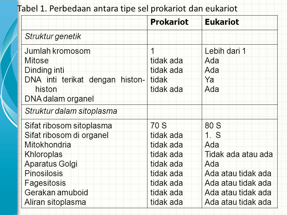 ProkariotEukariot Struktur genetik Jumlah kromosom Mitose Dinding inti DNA inti terikat dengan histon- histon DNA dalam organel 1 tidak ada tidak tida