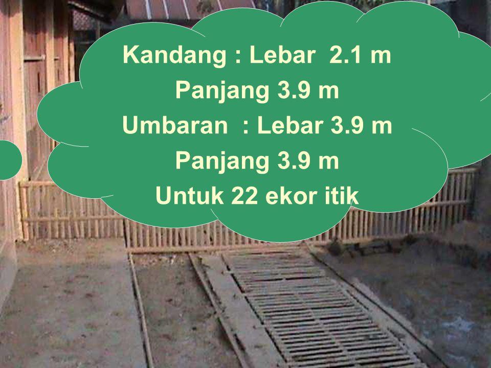 Kandang : Lebar 2.1 m Panjang 3.9 m Umbaran : Lebar 3.9 m Panjang 3.9 m Untuk 22 ekor itik