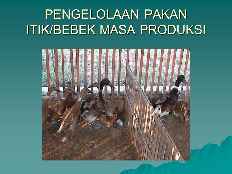 Bekatul 50%, Gabah 12,5 % Jagung kuning Giling 12,5 % Konsentrat 144 25 % Tepung ikan asin 1 sndk mkn/3Kg Pakan campuran
