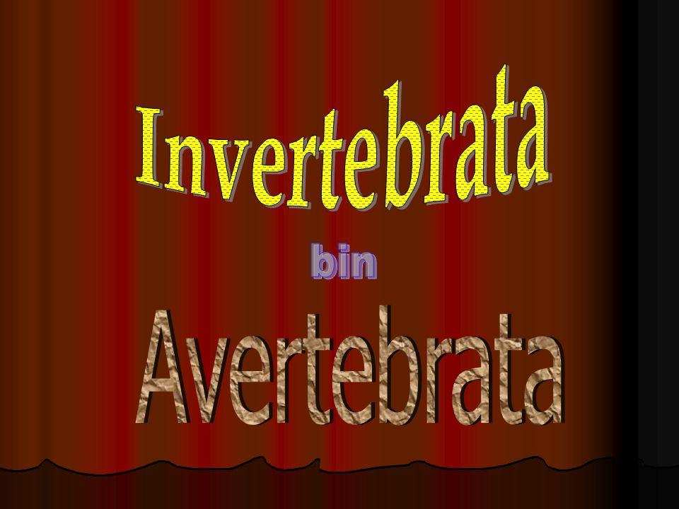 A. Avertebrata Tidak bertulang belakang 1. Protozoa Hewan bersel satu (akhirnya dikelompokkan dalam ganggang/ alga) 2. Metazoa Hewan bersel banyak a.