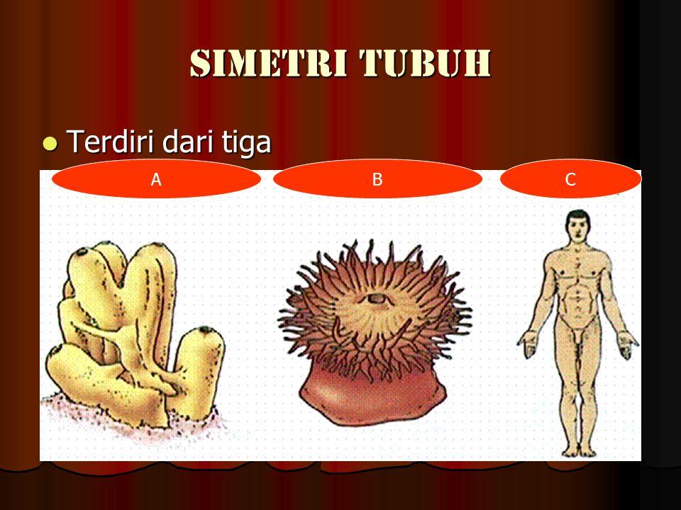 BAGIAN BAGIAN TUBUH CACING TANAH Terdiri dari tiga bagian yaitu: Terdiri dari tiga bagian yaitu: mulut klitelum anus