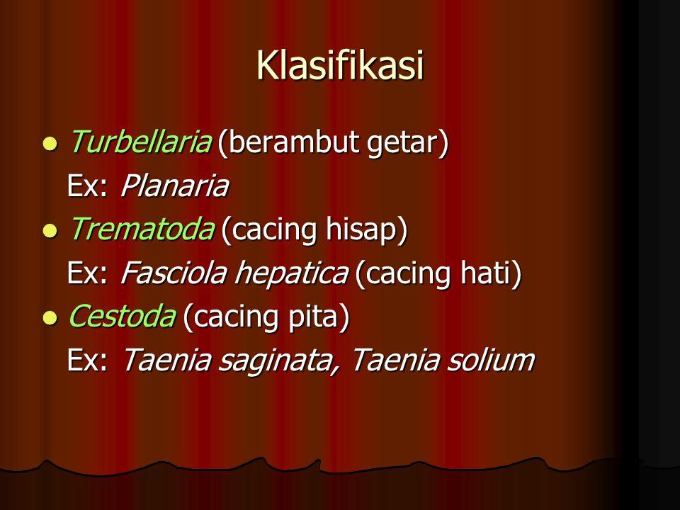 FILUM PLATYHELMINTHES Lapisan tubuh Triploblastik. Lapisan tubuh Triploblastik. Ukuran tubuh mikroskopis hingga 20 m. Ukuran tubuh mikroskopis hingga