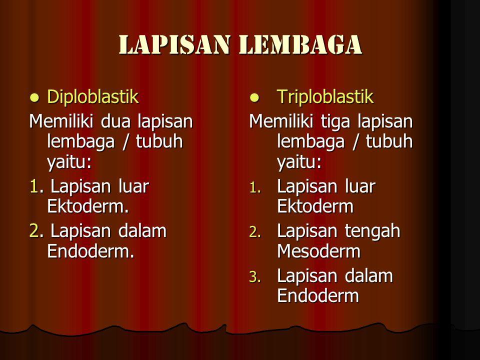 LAPISAN LEMBAGA Diploblastik Diploblastik Memiliki dua lapisan lembaga / tubuh yaitu: 1.