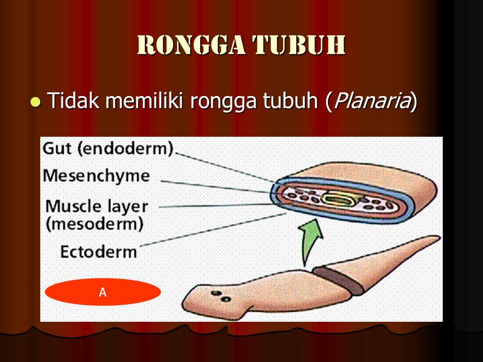 RONGGA TUBUH Tidak memiliki rongga tubuh (Planaria) Tidak memiliki rongga tubuh (Planaria) A