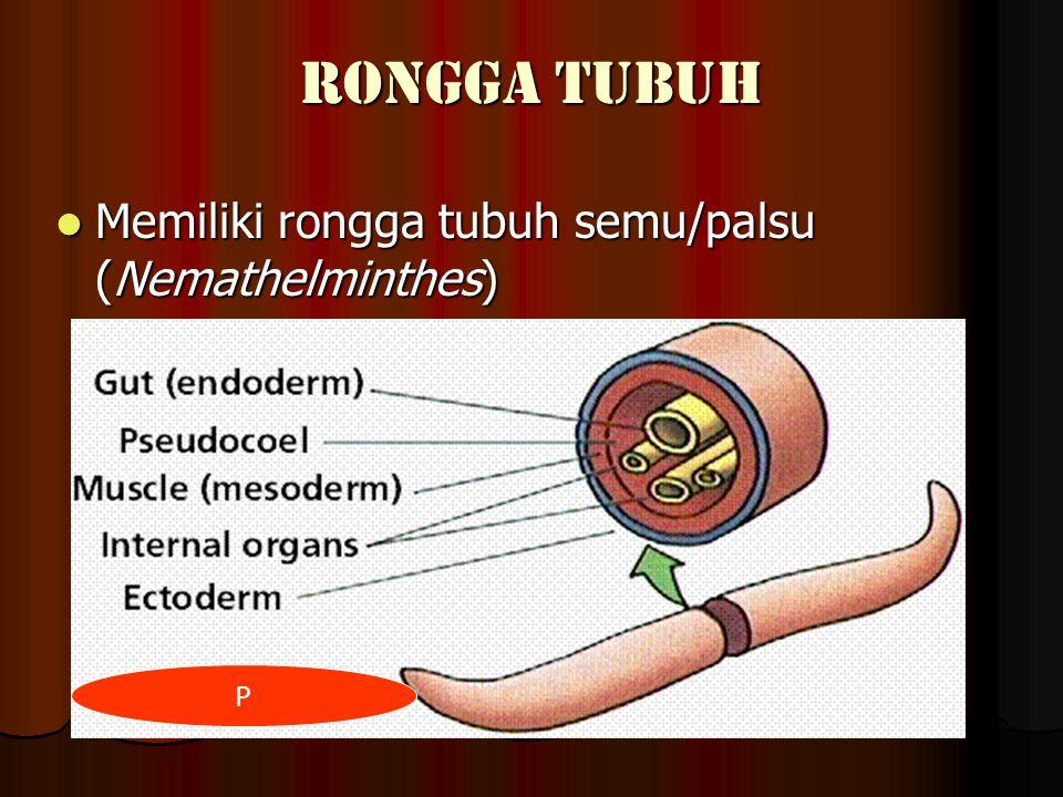 RONGGA TUBUH Memiliki rongga tubuh semu/palsu (Nemathelminthes) Memiliki rongga tubuh semu/palsu (Nemathelminthes) P
