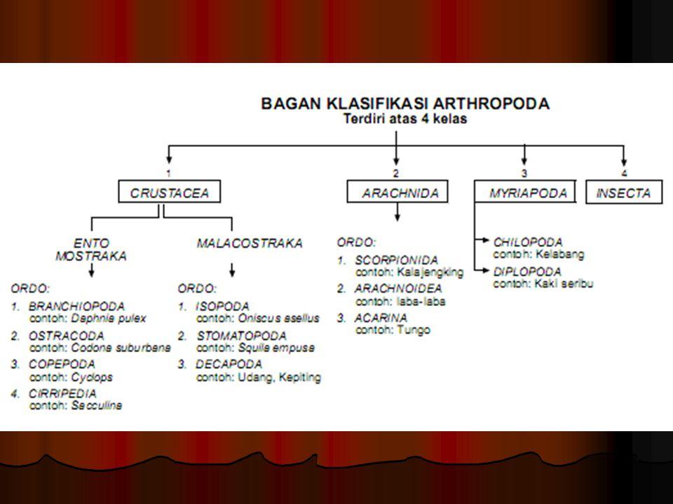 Klasifikasi Kelas Crustacea (golongan udang). Kelas Crustacea (golongan udang). Kelas Arachnida (golongan kalajengking dan laba-laba). Kelas Arachnida