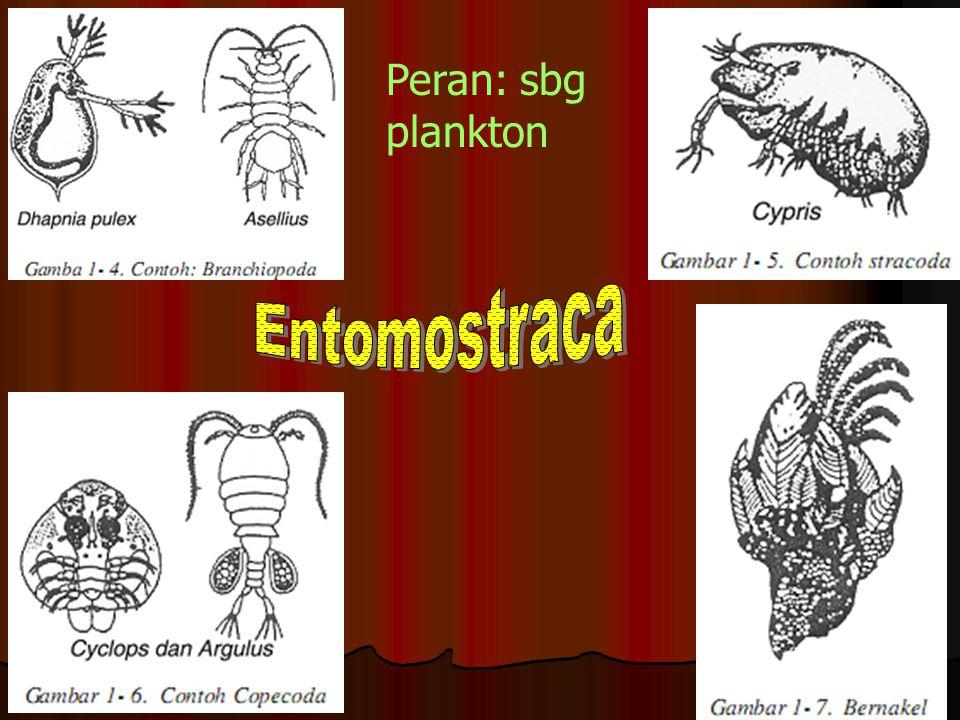 1. Crustacea (udang)