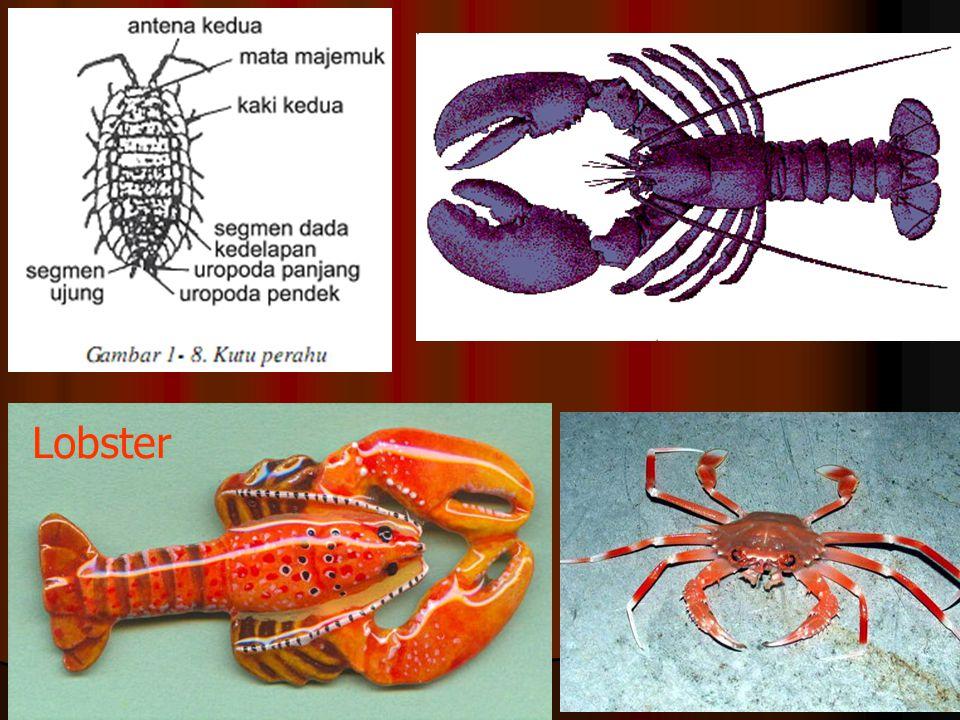 Peran: sbg plankton