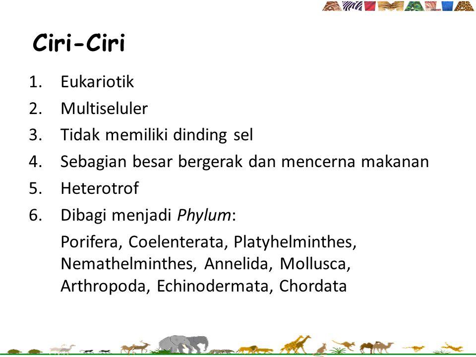 Ciri-Ciri 1.Eukariotik 2.Multiseluler 3.Tidak memiliki dinding sel 4.Sebagian besar bergerak dan mencerna makanan 5.Heterotrof 6.Dibagi menjadi Phylum