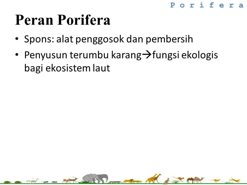 Spons: alat penggosok dan pembersih Penyusun terumbu karang  fungsi ekologis bagi ekosistem laut P o r i f e r a Peran Porifera