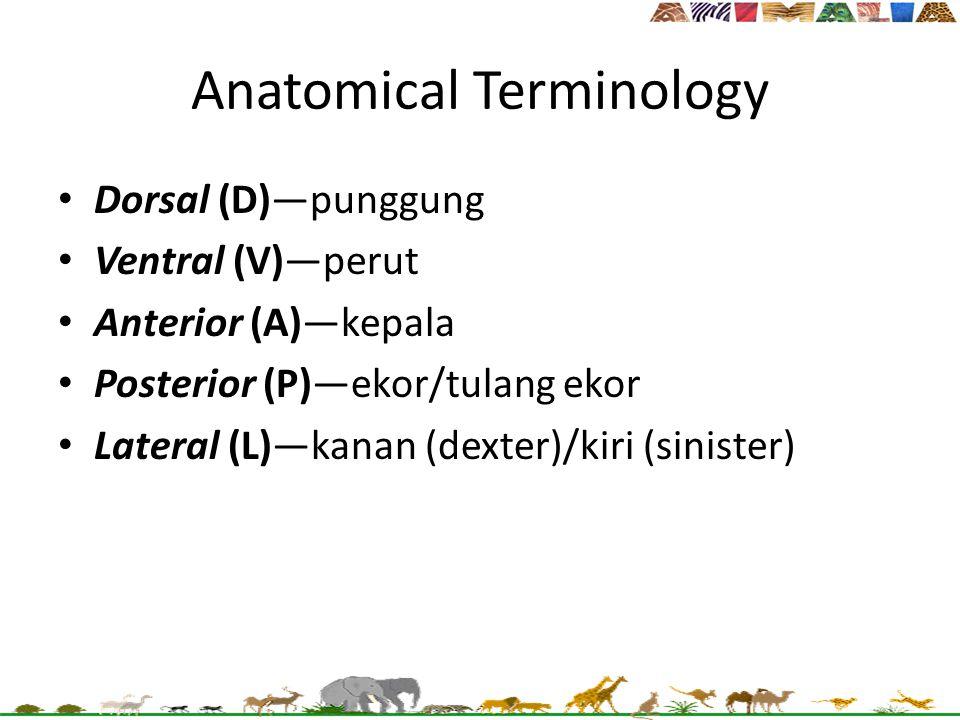 Anatomical Terminology Dorsal (D)—punggung Ventral (V)—perut Anterior (A)—kepala Posterior (P)—ekor/tulang ekor Lateral (L)—kanan (dexter)/kiri (sinis