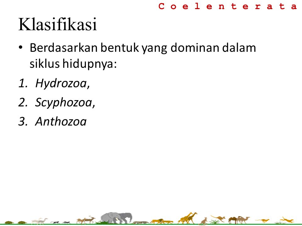 Berdasarkan bentuk yang dominan dalam siklus hidupnya: 1.Hydrozoa, 2.Scyphozoa, 3.Anthozoa C o e l e n t e r a t a Klasifikasi