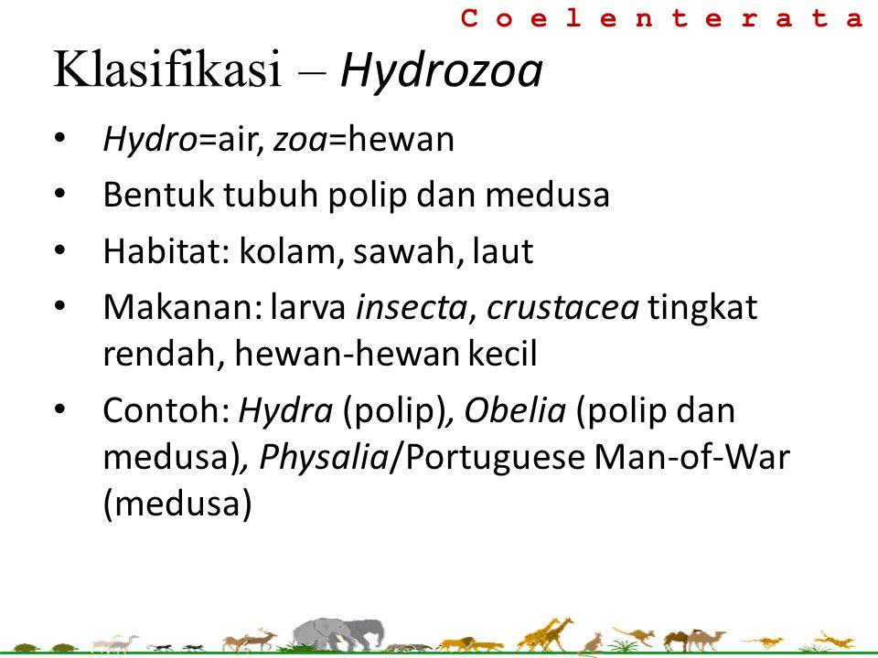 Hydro=air, zoa=hewan Bentuk tubuh polip dan medusa Habitat: kolam, sawah, laut Makanan: larva insecta, crustacea tingkat rendah, hewan-hewan kecil Con
