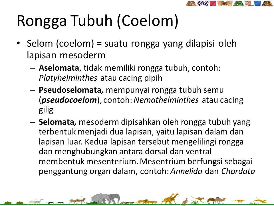 Rongga Tubuh (Coelom) Selom (coelom) = suatu rongga yang dilapisi oleh lapisan mesoderm – Aselomata, tidak memiliki rongga tubuh, contoh: Platyhelmint