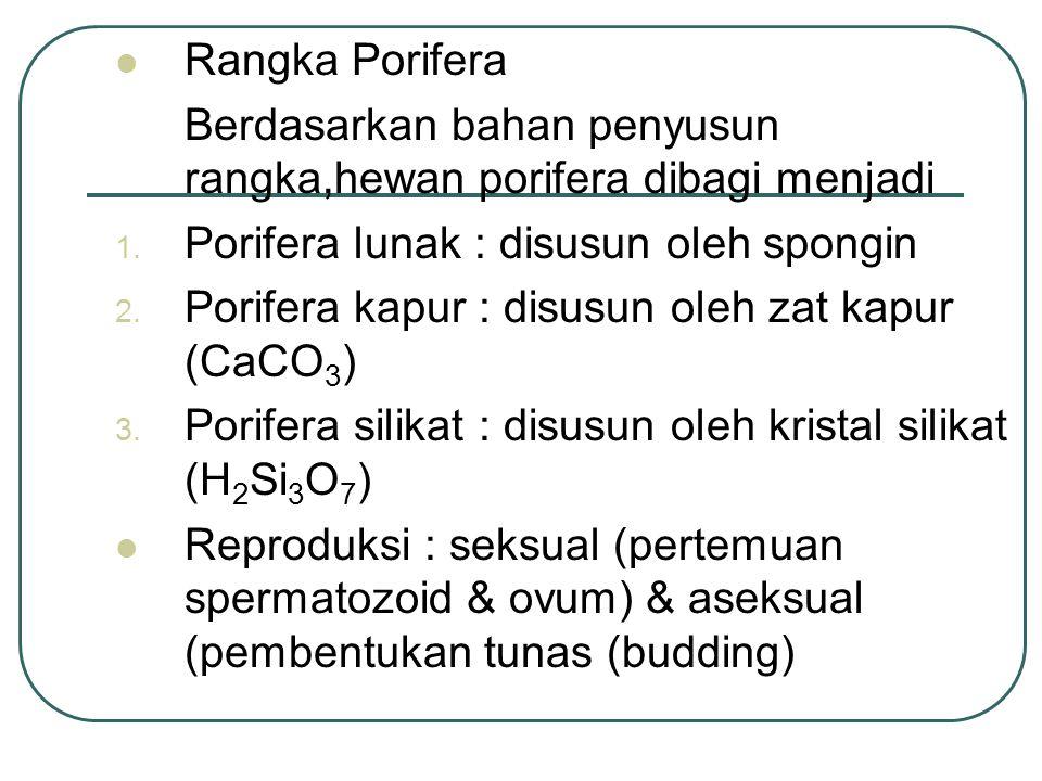 Rangka Porifera Berdasarkan bahan penyusun rangka,hewan porifera dibagi menjadi 1.