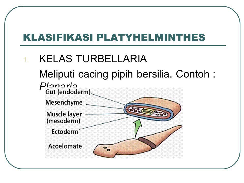 KLASIFIKASI PLATYHELMINTHES 1. KELAS TURBELLARIA Meliputi cacing pipih bersilia. Contoh : Planaria.