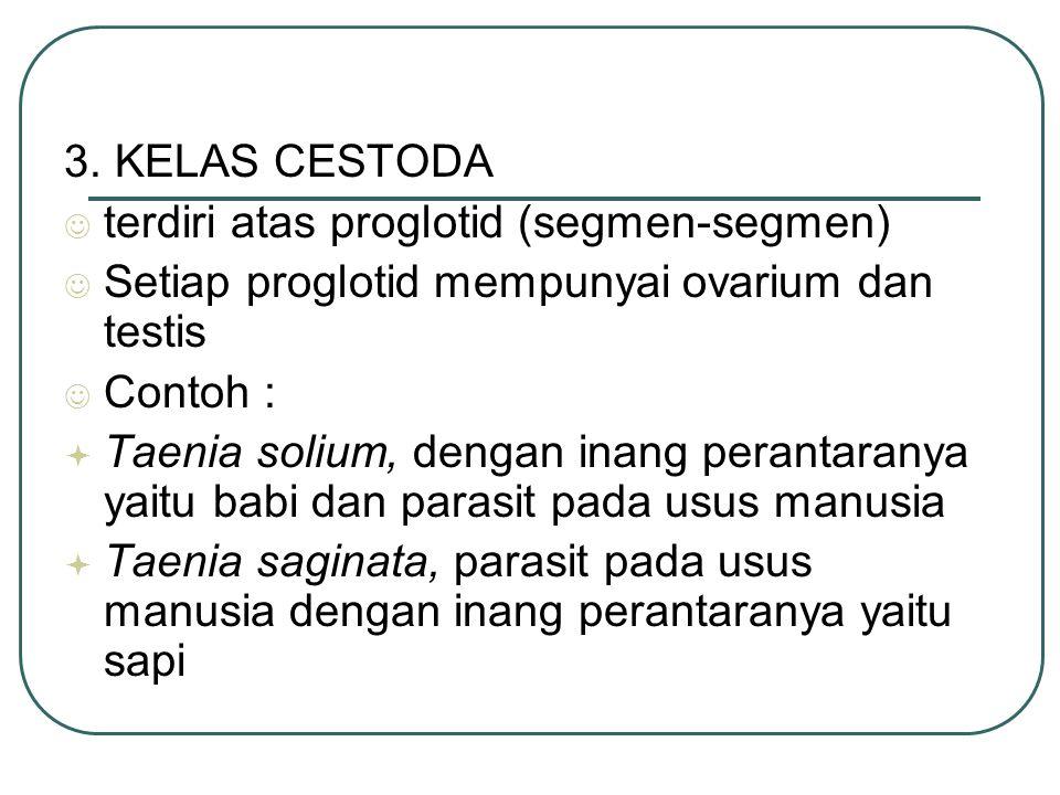 3. KELAS CESTODA terdiri atas proglotid (segmen-segmen) Setiap proglotid mempunyai ovarium dan testis Contoh :  Taenia solium, dengan inang perantara