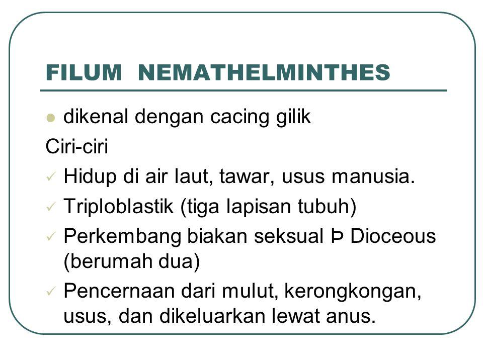 FILUM NEMATHELMINTHES dikenal dengan cacing gilik Ciri-ciri Hidup di air laut, tawar, usus manusia.