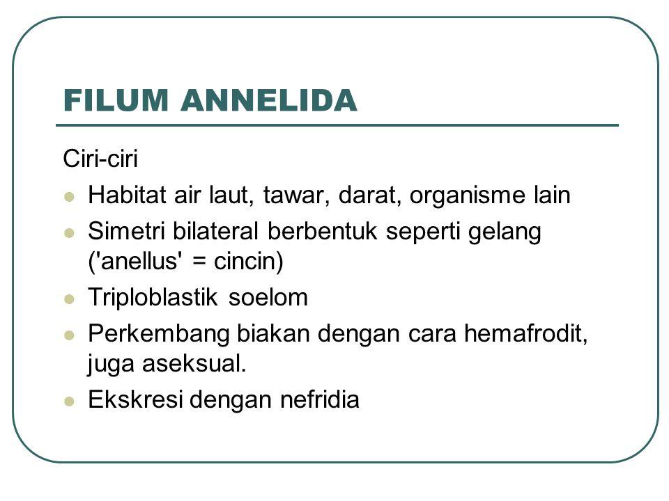 FILUM ANNELIDA Ciri-ciri Habitat air laut, tawar, darat, organisme lain Simetri bilateral berbentuk seperti gelang ( anellus = cincin) Triploblastik soelom Perkembang biakan dengan cara hemafrodit, juga aseksual.