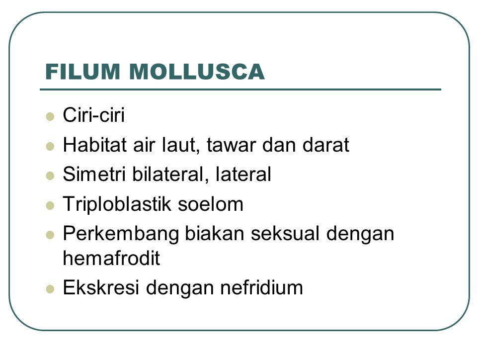 FILUM MOLLUSCA Ciri-ciri Habitat air laut, tawar dan darat Simetri bilateral, lateral Triploblastik soelom Perkembang biakan seksual dengan hemafrodit Ekskresi dengan nefridium