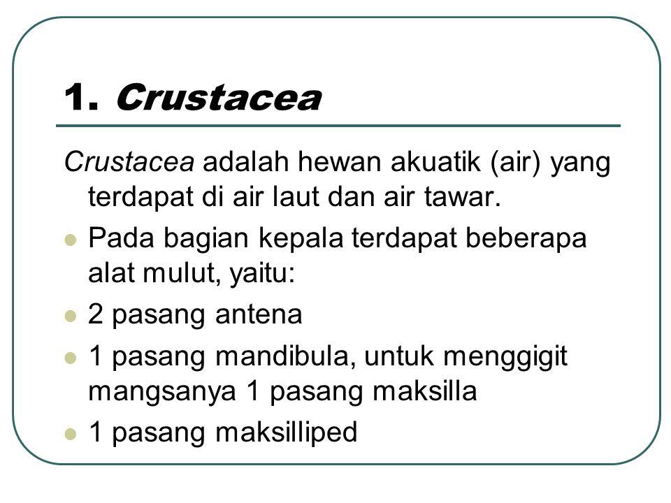1.Crustacea Crustacea adalah hewan akuatik (air) yang terdapat di air laut dan air tawar.