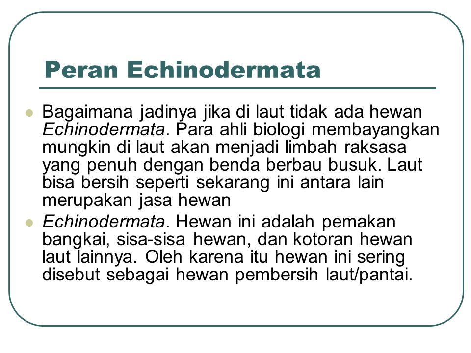 Peran Echinodermata Bagaimana jadinya jika di laut tidak ada hewan Echinodermata.