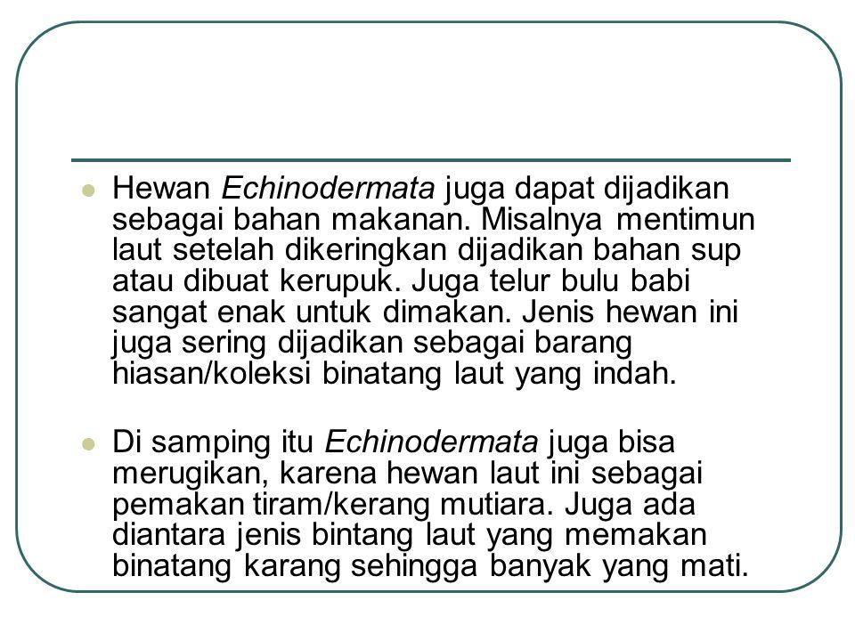 Hewan Echinodermata juga dapat dijadikan sebagai bahan makanan.