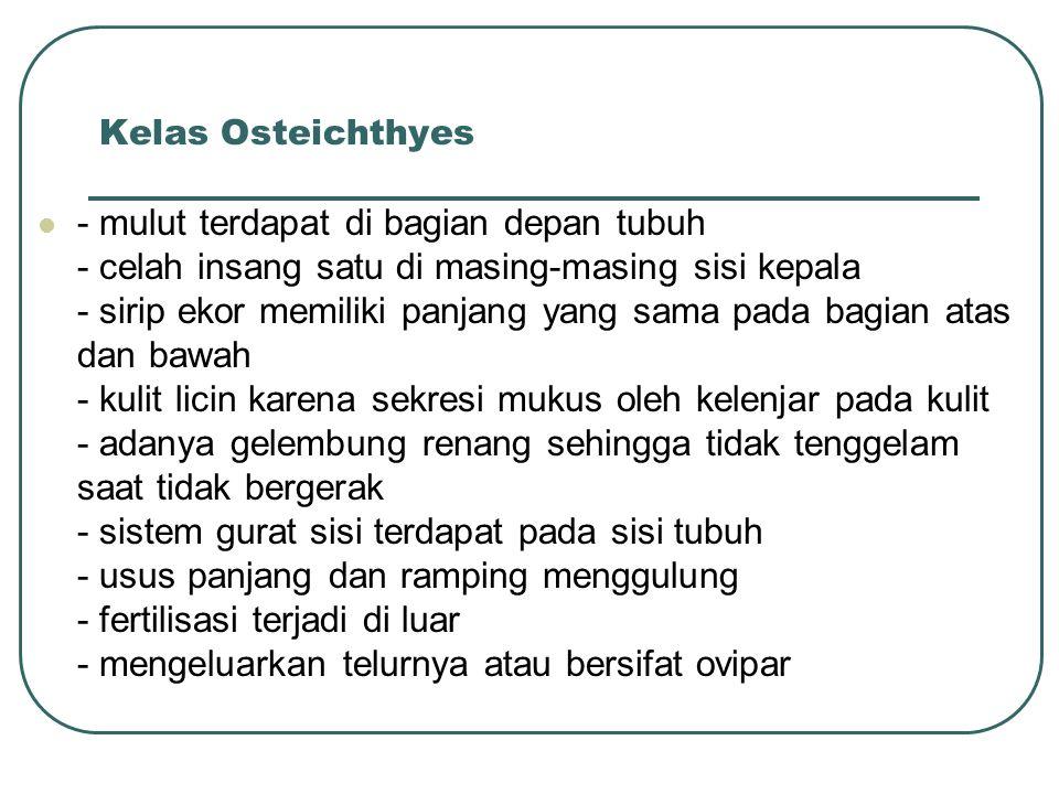 Kelas Osteichthyes - mulut terdapat di bagian depan tubuh - celah insang satu di masing-masing sisi kepala - sirip ekor memiliki panjang yang sama pada bagian atas dan bawah - kulit licin karena sekresi mukus oleh kelenjar pada kulit - adanya gelembung renang sehingga tidak tenggelam saat tidak bergerak - sistem gurat sisi terdapat pada sisi tubuh - usus panjang dan ramping menggulung - fertilisasi terjadi di luar - mengeluarkan telurnya atau bersifat ovipar